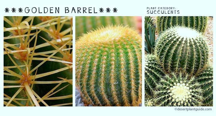 Top 100 Desert Plants Desert Plants
